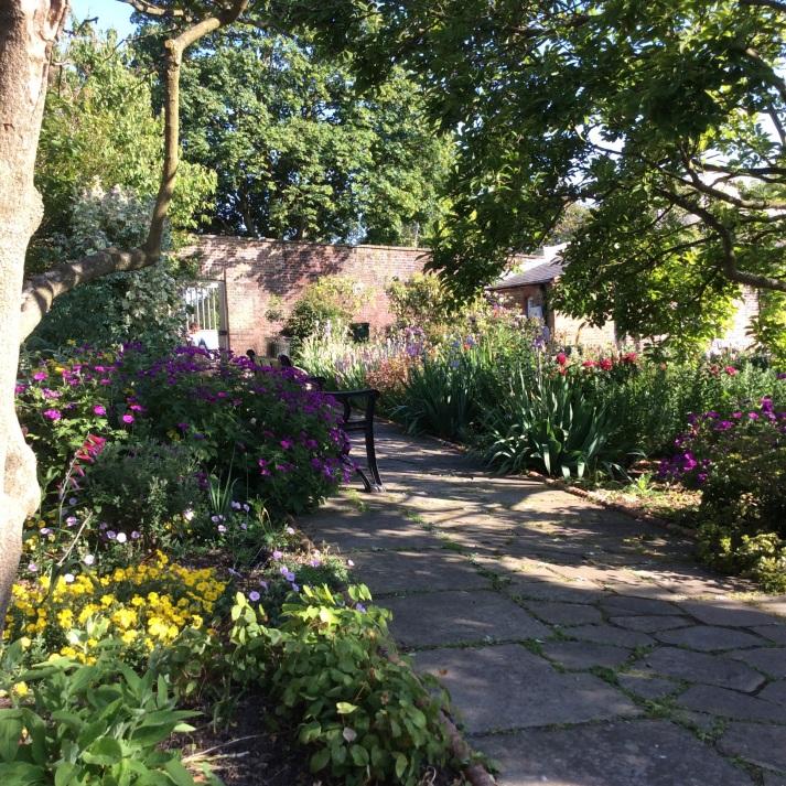 Dappled shade in evening garden